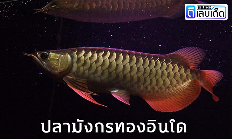 5 ปลามงคล เสริมโชคลาภ 1
