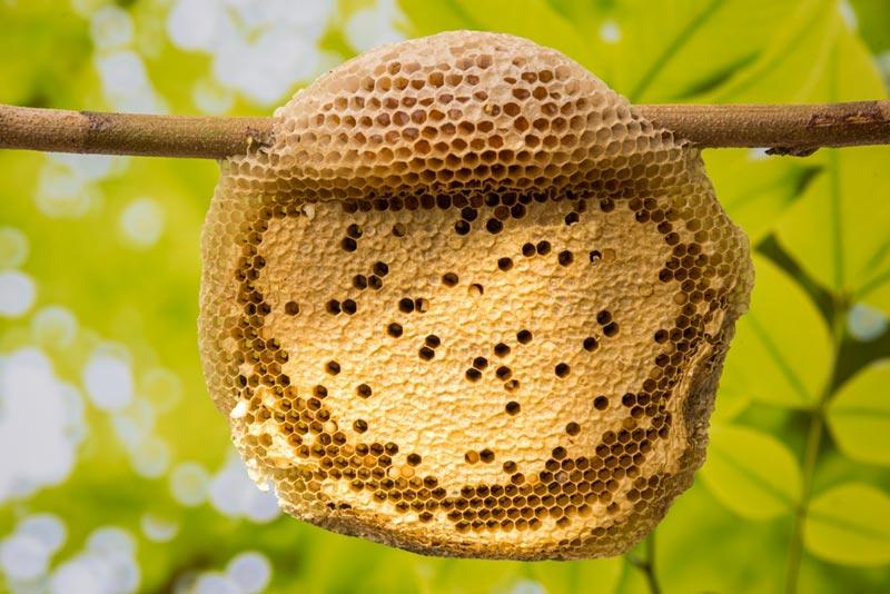 ฝันเห็นรังผึ้ง