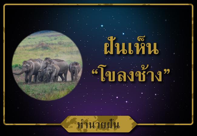 ทำนายฝันว่าเห็นช้างให้เลขอะไรบ้าง?