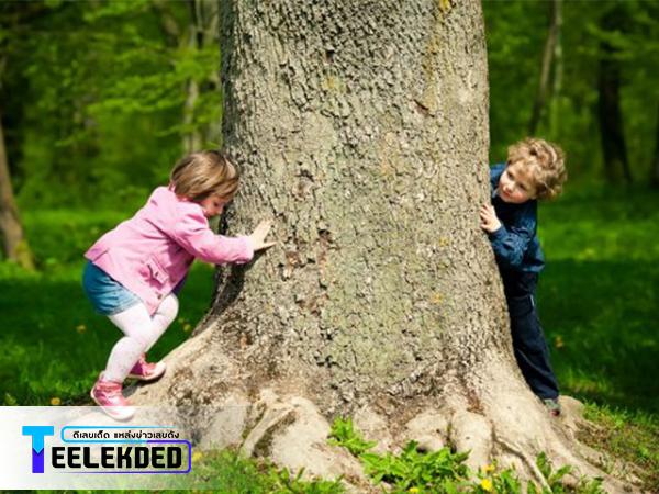 ฝันว่าปีนต้นไม้ ให้เลขเด็ดแม่นๆอะไรบ้าง?