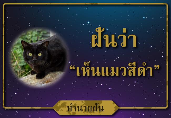 ฝันเห็นแมวสีดำหลายตัวเลขนำโชคดีเลขอะไร?